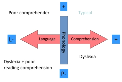 Diagram of phonological and linguistic ability